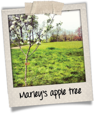 Marley polaroid tree