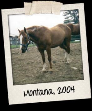 Montana polaroid 2004