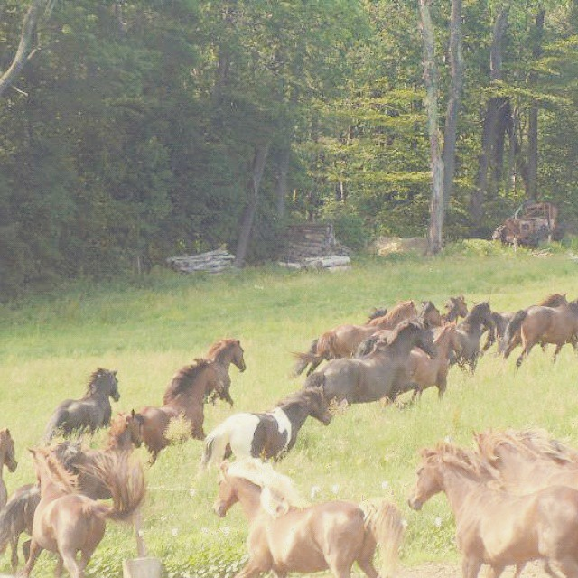 herd run 2